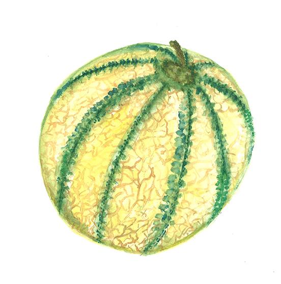 Melon, aquarele