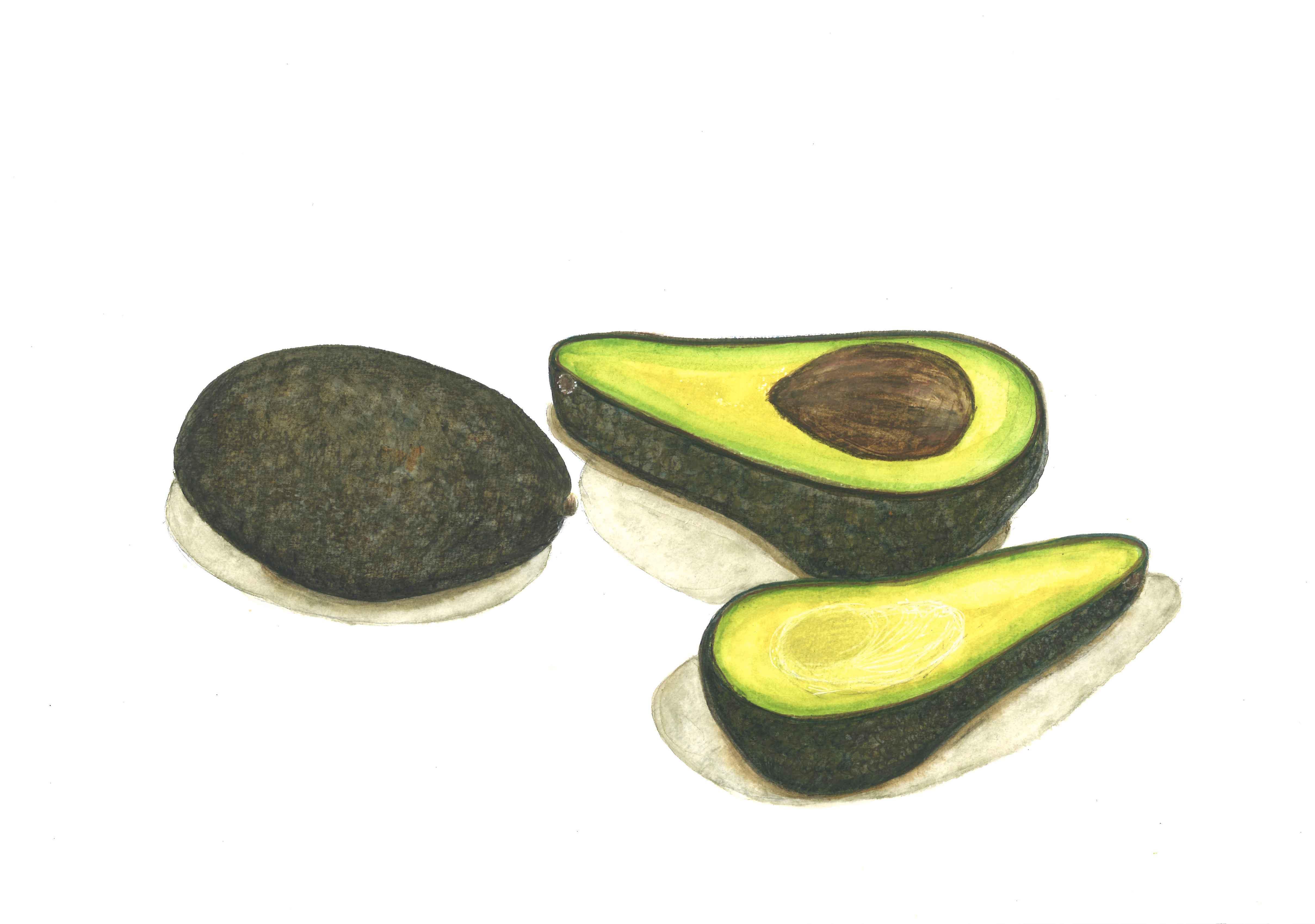 Avocats, aquarelle